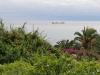Флора на острове Мадейра
