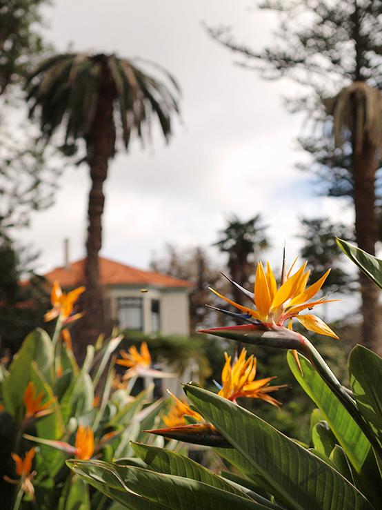 Ботанический сад - Фуншал