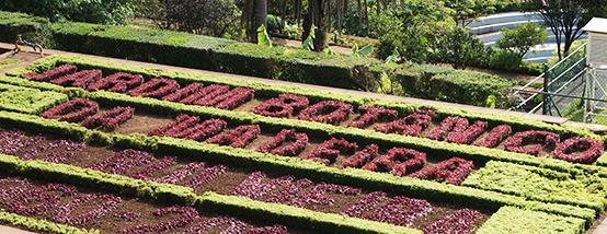 Ботанический сад в Фуншале